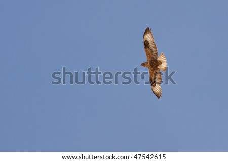 Eagle flying in the blue sky - stock photo