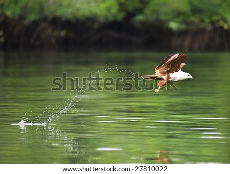 eagle flying over a stream with a trace of drops - stock photo