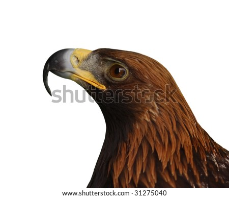 Eagle head isolated on white background