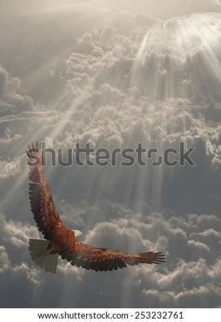Eagle in flight about the clouds - stock photo