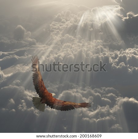 Eagle in Flight Above the Clouds - stock photo