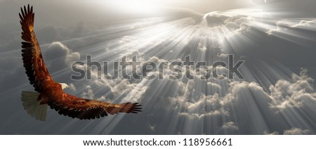 Eagle in flight above tyhe clouds - stock photo