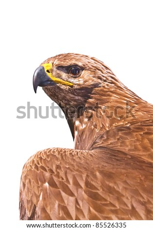 Eagle isolated - stock photo