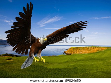 eagle landing in grass - stock photo