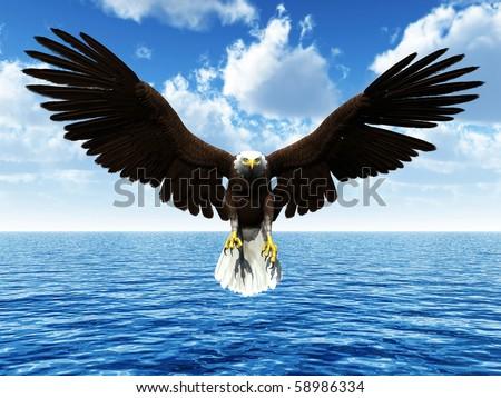 eagle landing on ocean - stock photo