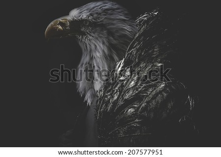 Eagle man wearing jacket golden feathers - stock photo