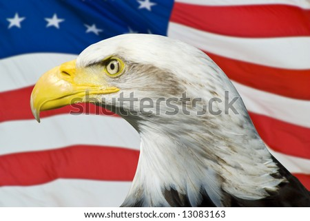Eagle on an American Flag - stock photo