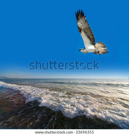 Eagle on by sea sultry - stock photo