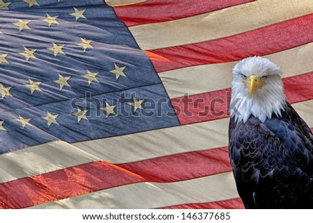 eagle on star and stripes american US flag - stock photo