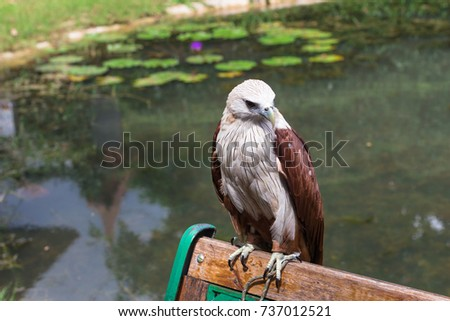 Eagle on the bench