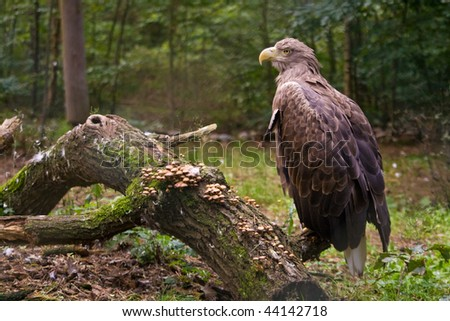 Eagle on the branch - stock photo
