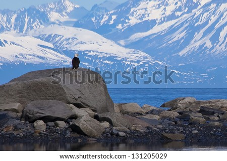 Eagle on the Rocks - stock photo