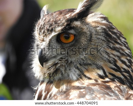 Eagle Owl at wildlife center in Scotland