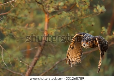 eagle owl attacking prey - stock photo