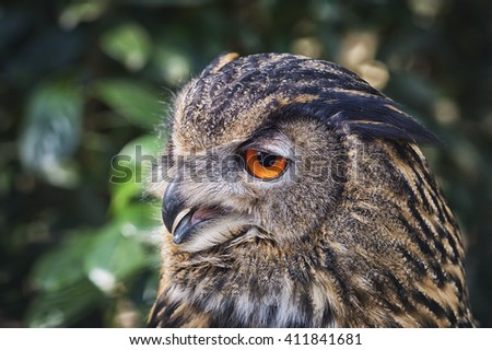 eagle owl bubo bubo profile