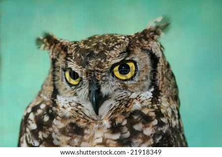 Eagle owl close up with big round yellow eyes