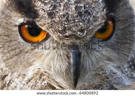 eagle owl eyes - stock photo
