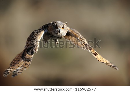 Eagle-Owl In Flight And Calling - stock photo