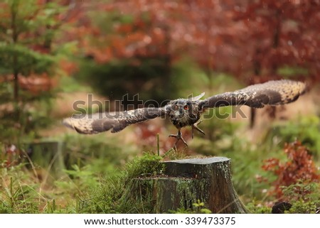 eagle owl in the air - stock photo