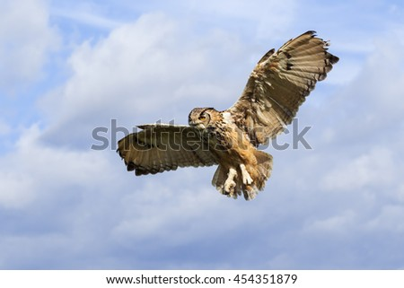 Eagle Owl in the air. A huge Bengal eagle owl flies in a blue sky. - stock photo