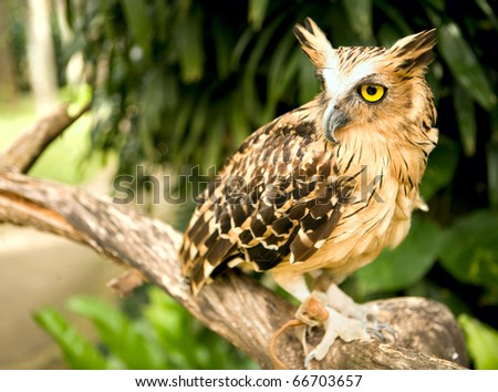 Eagle owl in the wild nature - stock photo