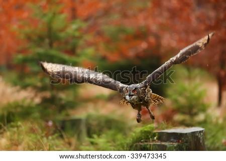 eagle owl is nice flying - stock photo