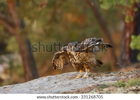 eagle owl is starting to fly - stock photo
