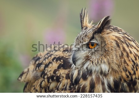 Eagle owl looking over his shoulder - stock photo