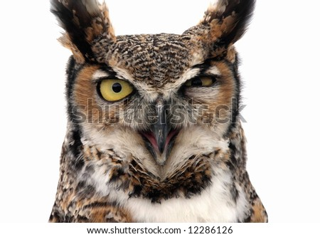 Eagle Owl looking threatening. Isolated on white. - stock photo