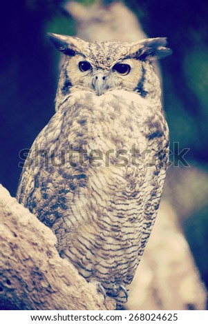 Eagle owl on a tree with vintage soft colors effect. - stock photo