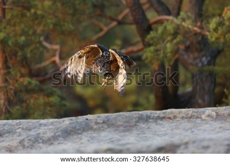 eagle owl si flying aeound - stock photo