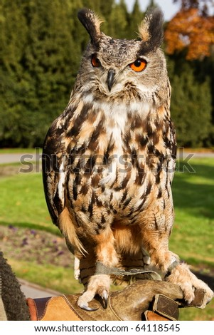 eagle owl  sitting on hands - stock photo