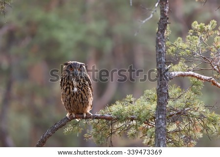 eagle owl sitting on the branch - stock photo