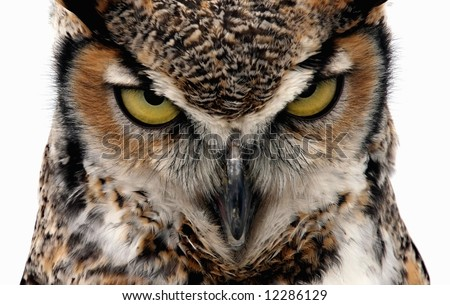 Eagle Owl staring at the camera in a threatening manner. Isolated on white - stock photo