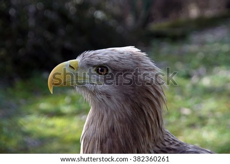 Eagle posing. - stock photo