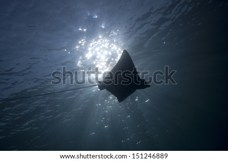 eagle ray swim silhouette