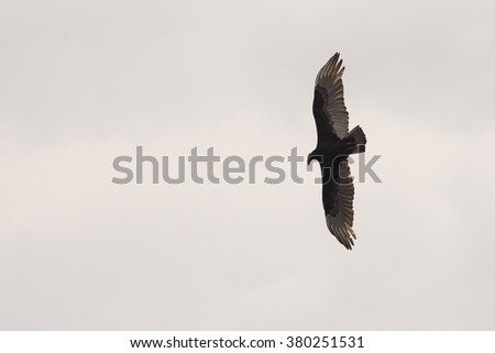 Eagle silhouette against storm clouds