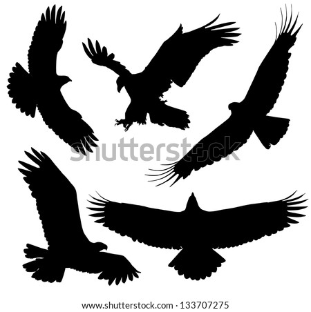 Eagle Silhouette on white background. Raster version with clipping paths - stock photo