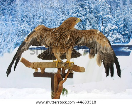 Eagle siting on a support over blue winter forest background - stock photo