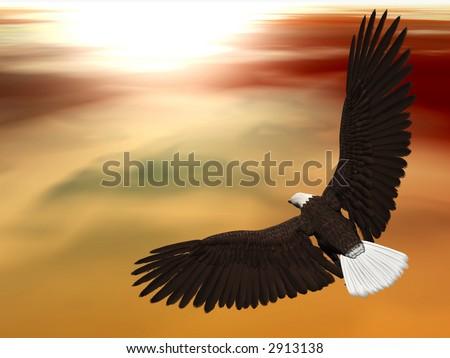 Eagle Soaring - stock photo