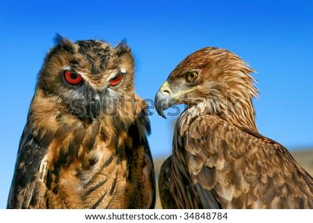 Eagle vs. Owl - stock photo