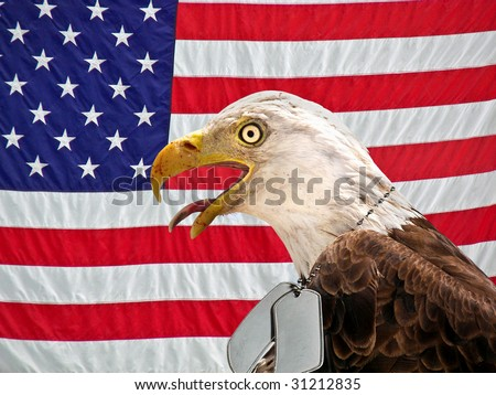eagle wearing military dog tags on flag - stock photo