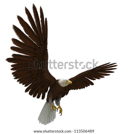 eagle white background - stock photo