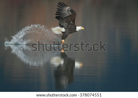 Eagle with a fish - stock photo