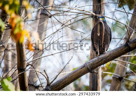Eagle with snake - stock photo