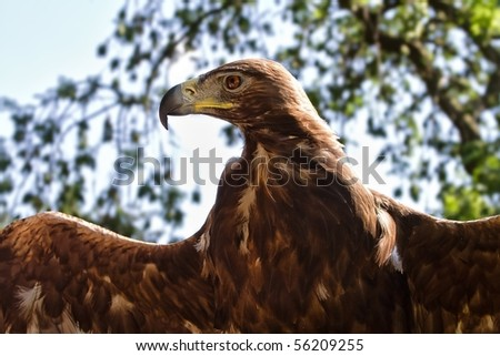 eagle with spread wings - stock photo