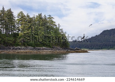 Eagles flying near an island in Southeast Alaska in summer. - stock photo