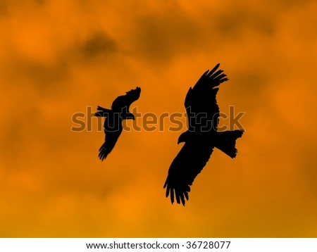 Eagles silhouettes on orange sky at sunset