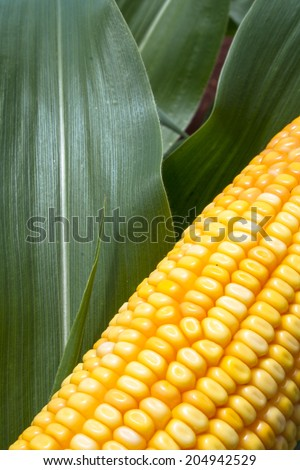 ear of corn and leaf - stock photo