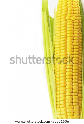 ear of ripe corn is isolated on  white background - stock photo